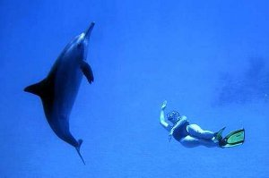 Août 2019 Nager en conscience avec les dauphins libres -MER ROUGE